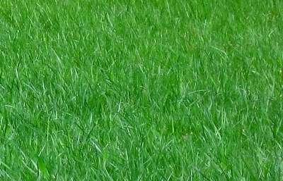 Leura Lawn Mowing Garden Services