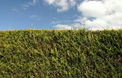 Leura Lawn Mowing Hedge Care Services